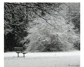 Snowy Woodland Scene Photograph Lincoln Park Forest Scene Affordable Home Photography Snowy Forest Woodland Scene Snowy Trees