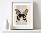 Printable Wall Decor Butterfly Art Print 8x10 DIY  for home printing -  yellow and black - AmeliyCom