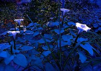 Blue Moonlight Twilight Flower Garden Night by EclecticForest