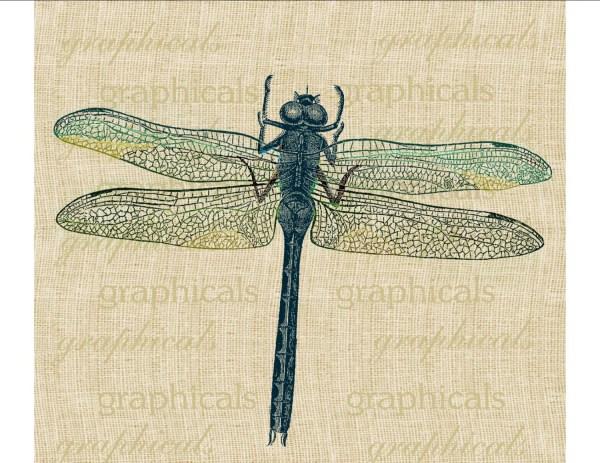 dragonfly instant clip art pastel