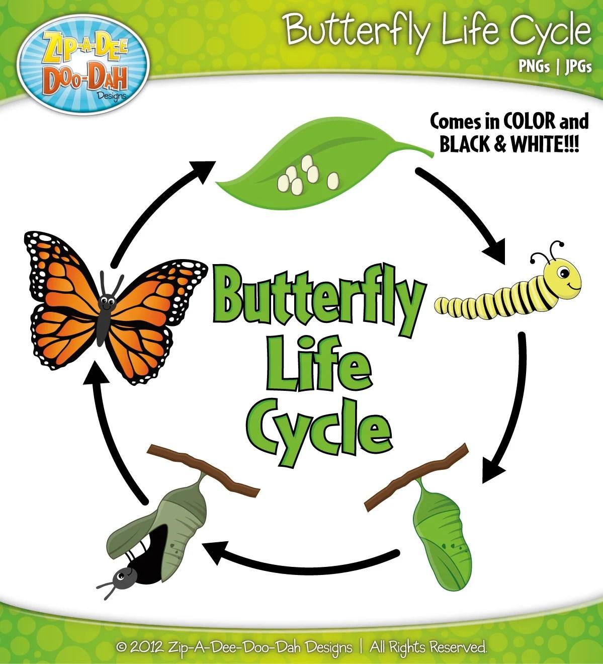 Butterfly Life Cycle Clipart Set Includes By Zipadeedoodahdesign