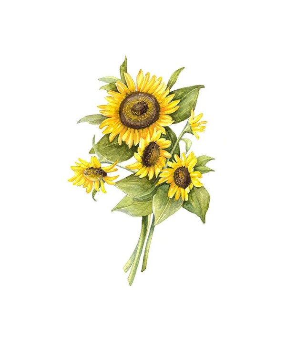 sunflower floral botanical print