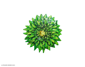 Green Spring Dahlia Flower Art Brooch - AtelierDenise