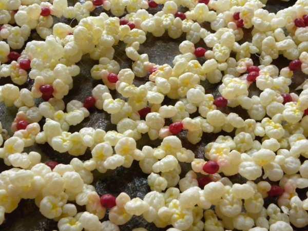 Vintage Popcorn And Cranberry Plastic Garland 24 Goodsbayou