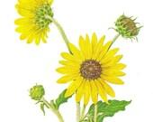 Shabby Cottage Chic Yellow Sun Flower Vintage Sunflower Print Summer Decor Garden Art - dadadreams