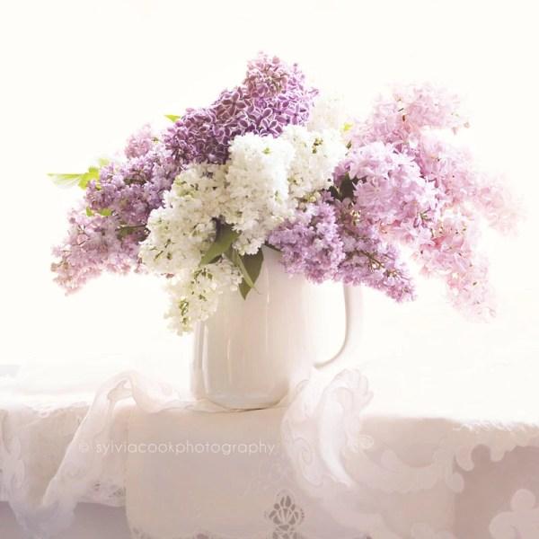 Items similar to Lilac photographshabby chic decorstill
