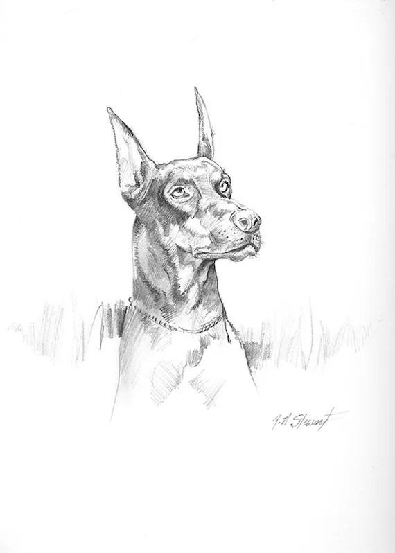Drawing of a Dog doberman pinscher