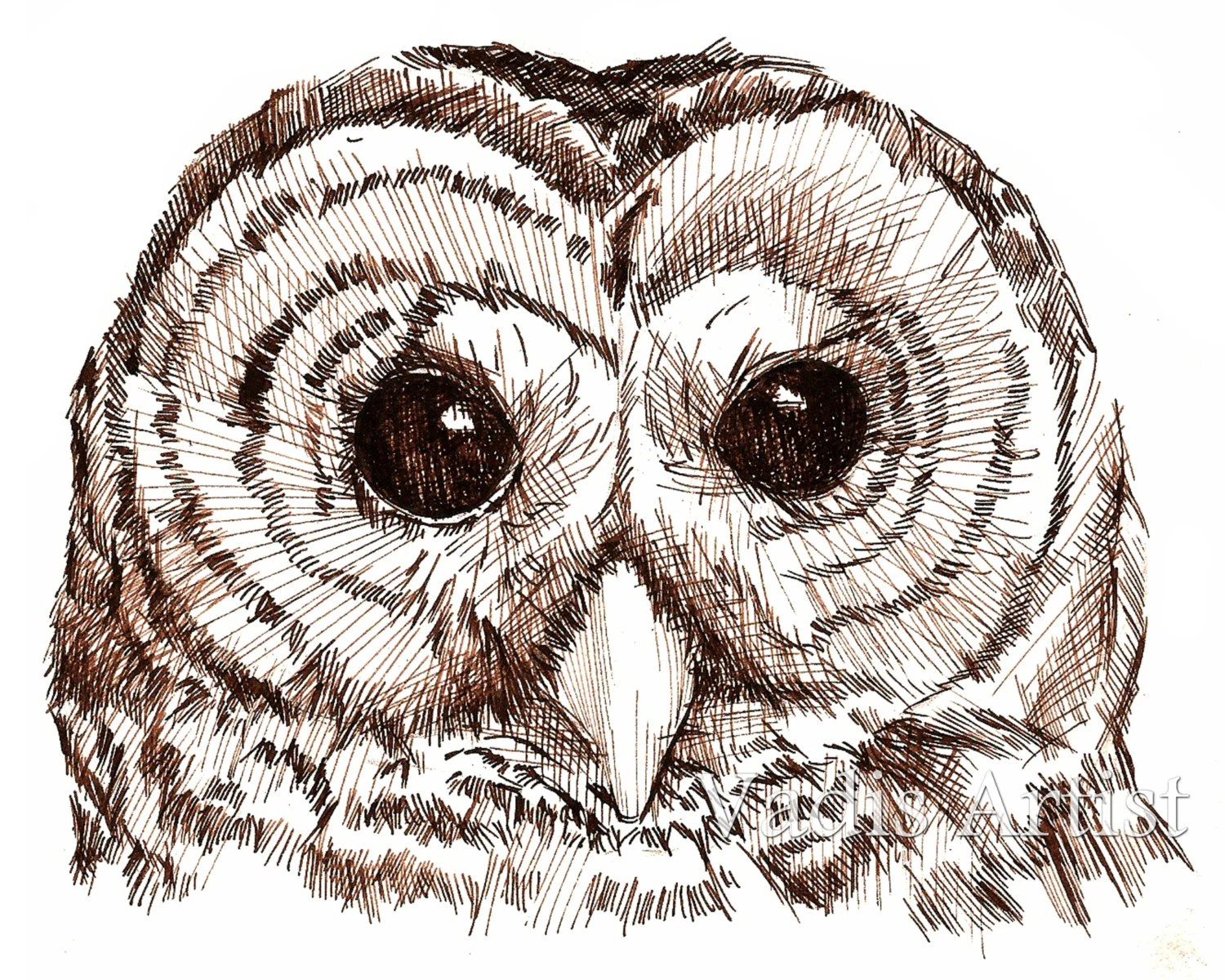 Pen And Ink Owl Drawing Art Print 4x6 5x7 Nursery Owl Art
