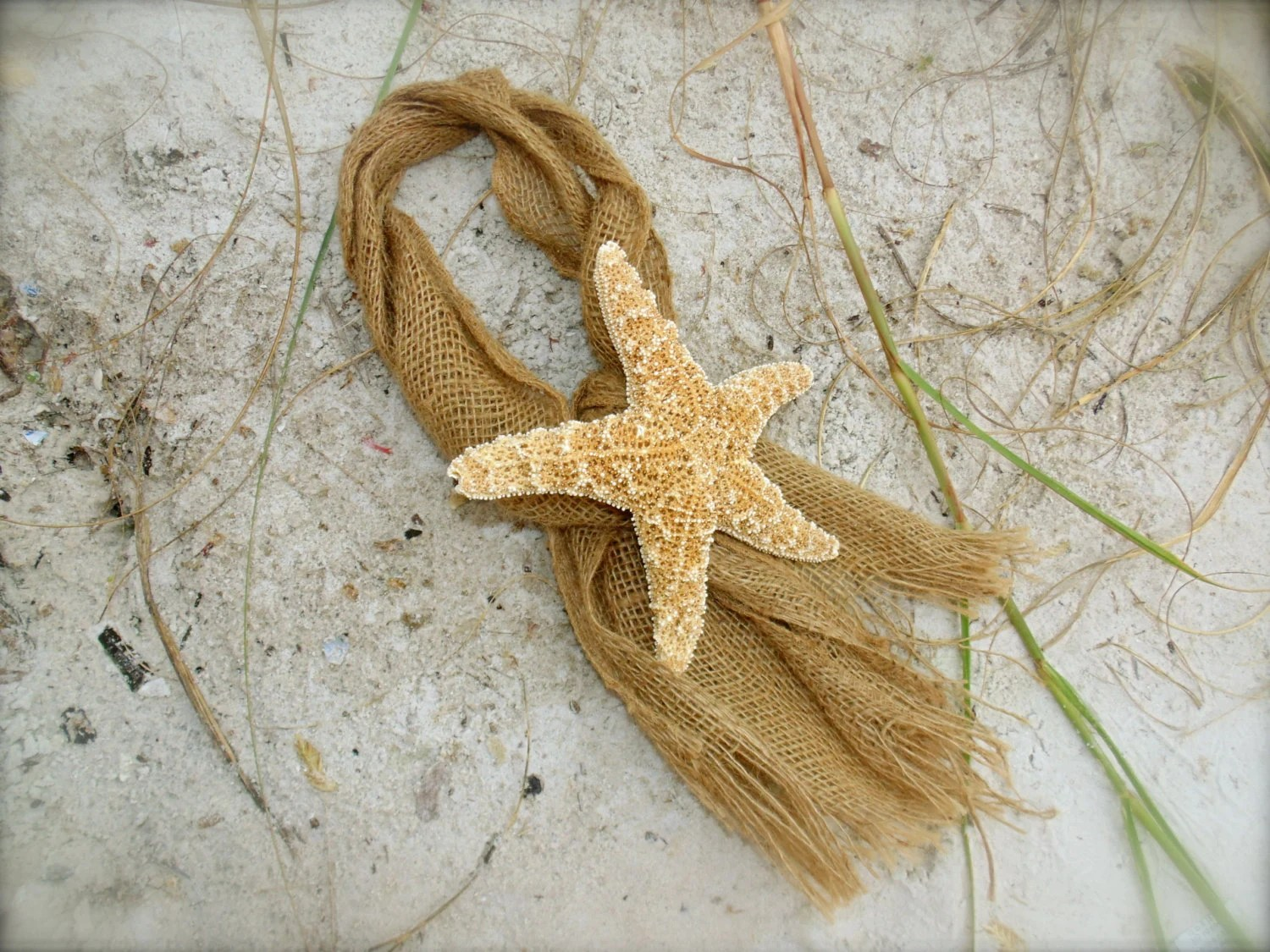 starfish wedding chair decorations white plastic chaise lounge chairs beach decor and burlap