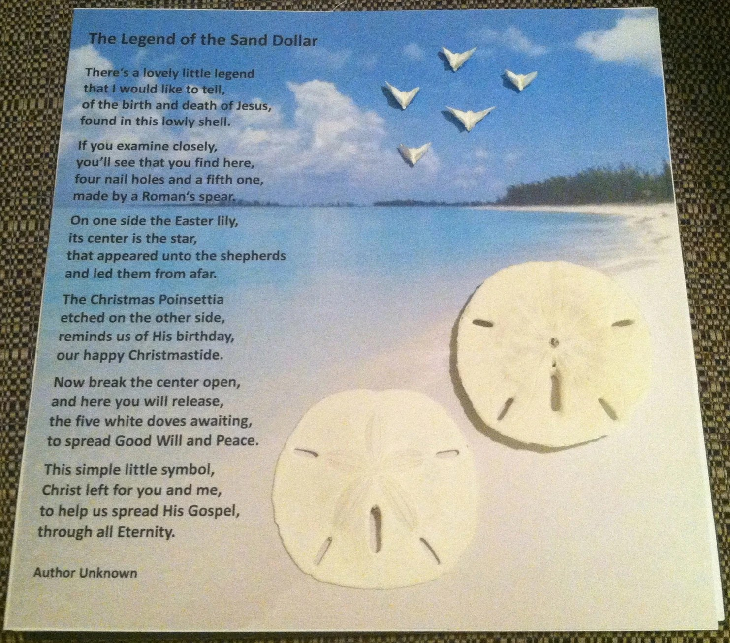 photograph regarding The Legend of the Sand Dollar Printable referred to as A Mount Inside A Shadow Box Sand Greenback - 12 months of Fresh new H2o