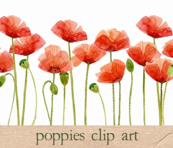 digital clipart watercolor poppies