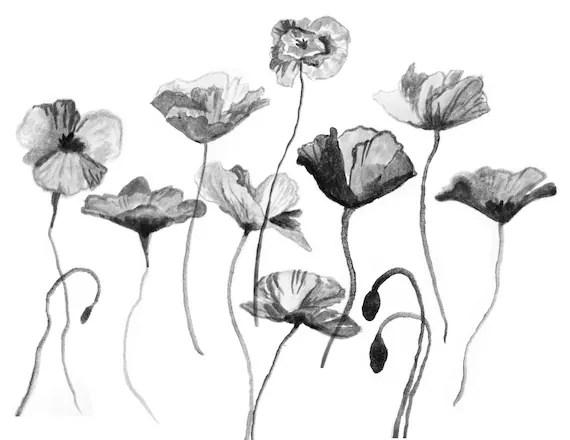 10 Poppy Flower Floral Photoshop Brushes Pattern Photoshop