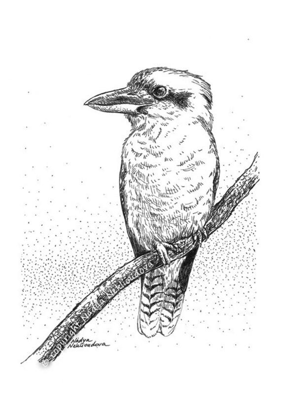 Kookaburra sketch original drawing 5x7 inches 12x18cm pen