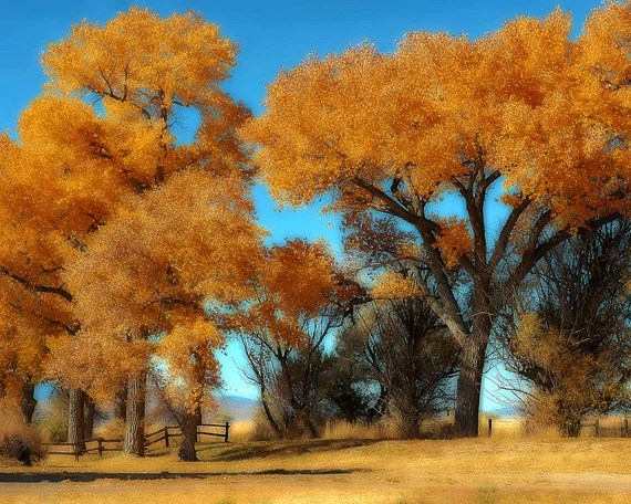 autumn rustic landscape