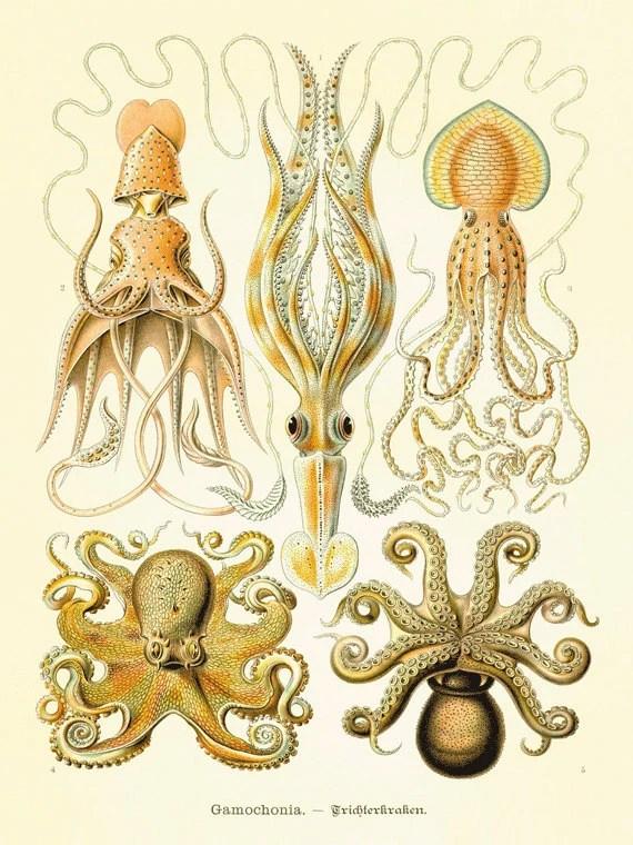 Octopus art antique print Victorian art print poster old prints Ocean Decor Natural History ocean art  large wall art nature print 12x16 art