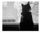 Black and White Cat Photography / Cat Photograph / Window Rain Winter Storm Photo / Abstract Modern Wall Art / Raindrops Gray Snow Winter - JillianAudreyDesigns