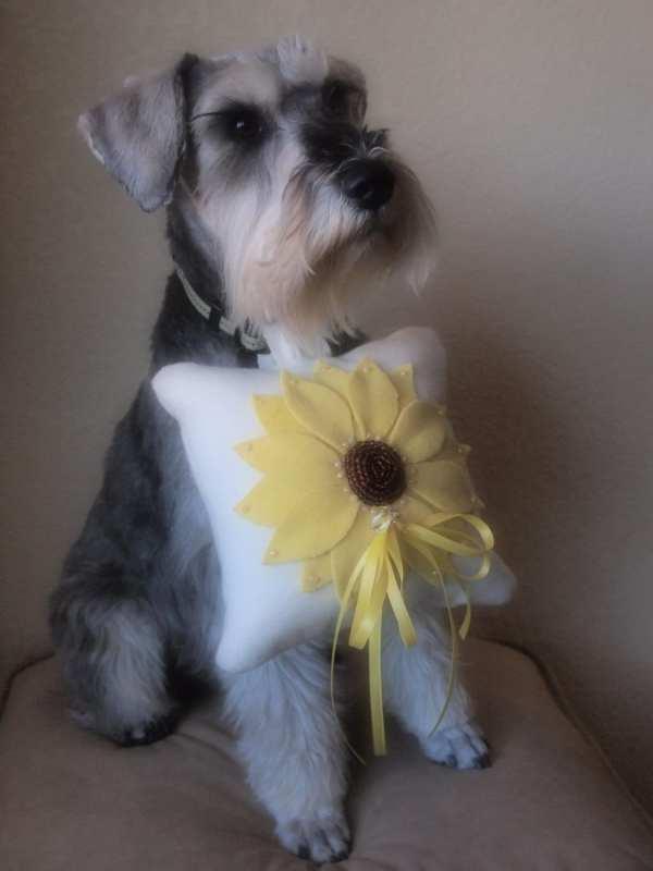 Dog Ring Bearer Pillow Wedding Yellow Brown by