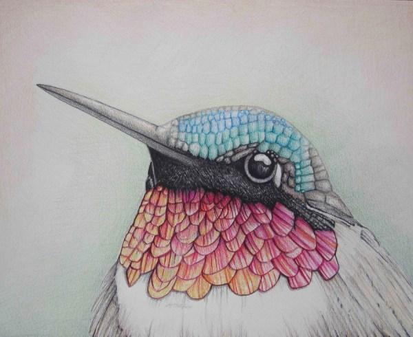 Pencil Art Work Close Hummingbird Mixed Media Original