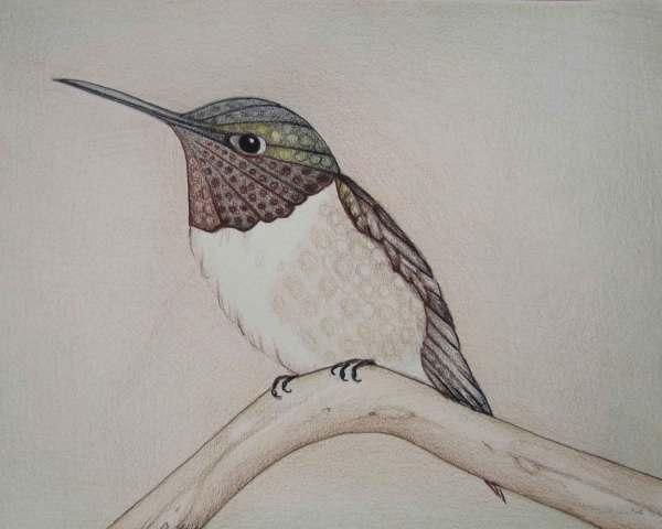 Pencil Art Work Multi Brown Hummingbird Branch Original