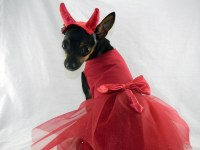 Little devil dog costume dress with horn headband XXS-M