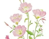 Pale Pink Flower Print Shabby Cottage Decor Spring Floral Wall Art  Evening Primrose - dadadreams