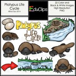 Platypus Life Cycle Diagram Micro Usb Wiring Clip Art Bundle