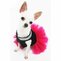 xxs chihuahua clothes - Video Search Engine at Search.com