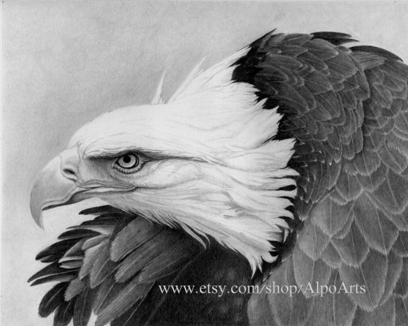 Eagle Pencil Drawing realistic wildlife drawing with bald