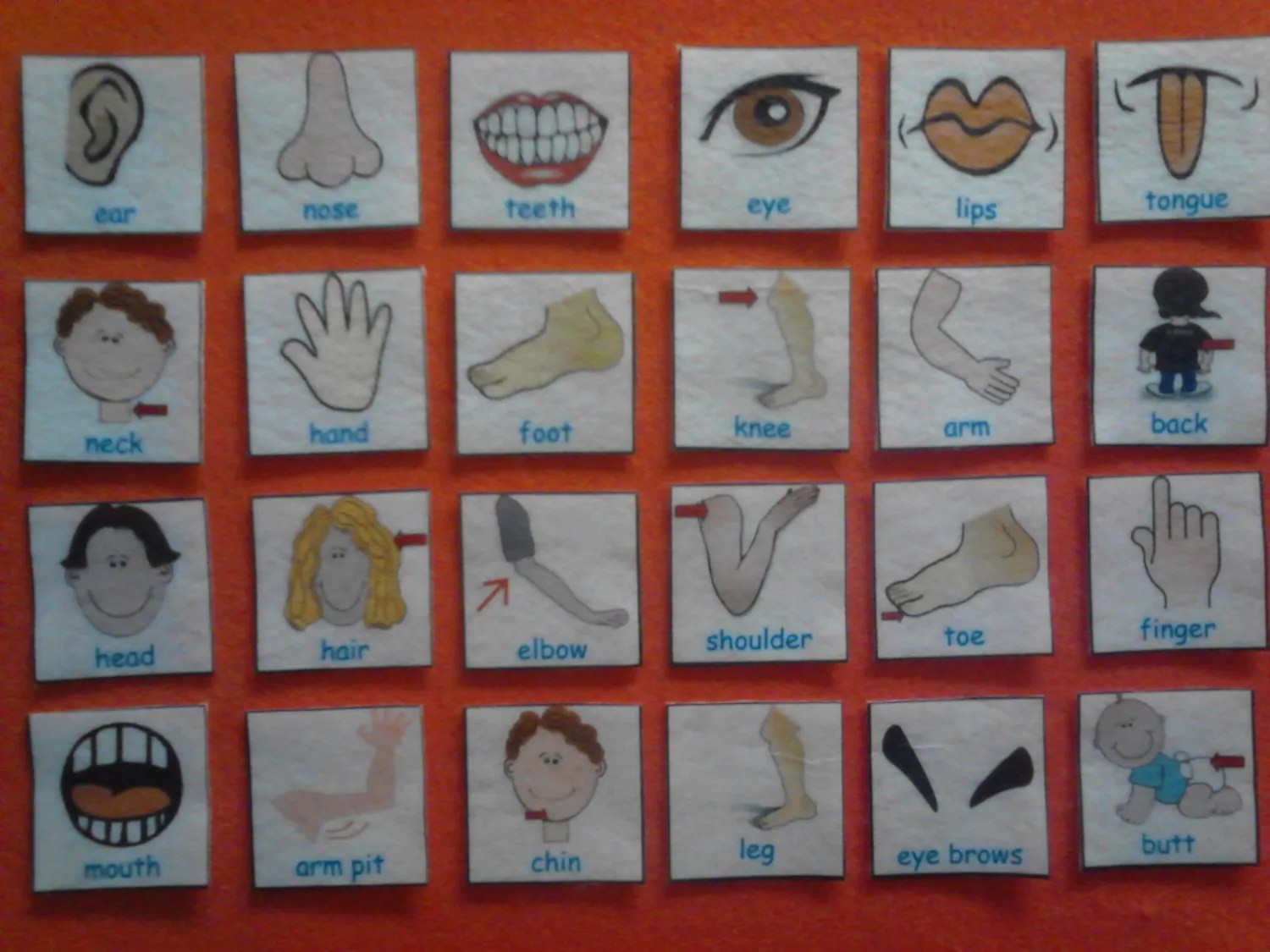 Human Body Parts Flash Cards Human Body Body By