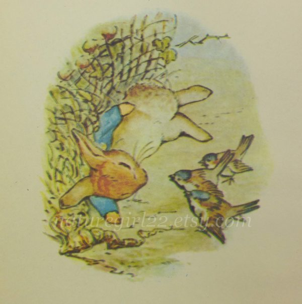 Peter Rabbit Illustrations Beatrix Potter Book Plate