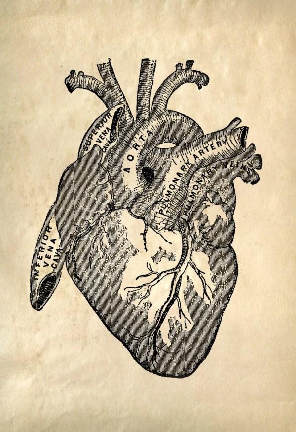 Heart Anatomy Vintage Reproduction Print. Human Biology Chart