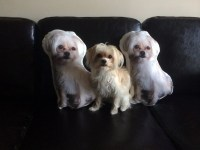 Dog Pillow, Photo Pillow, Custom Dog Pillow, Personalized ...