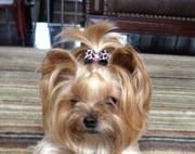 popular items girl dog bows