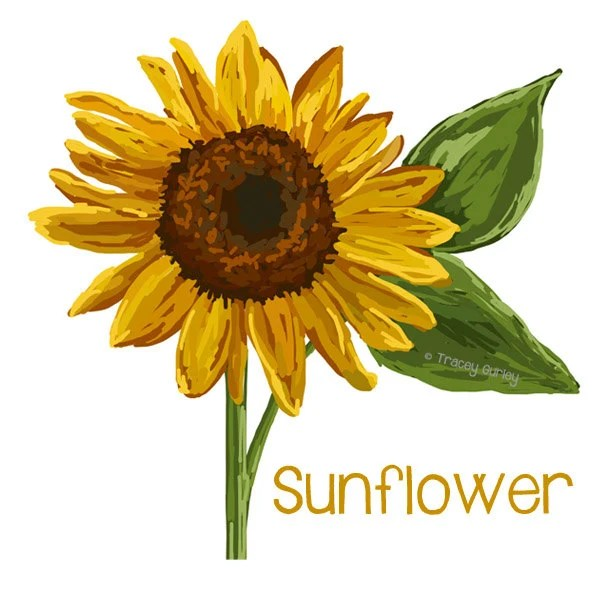 sunflower art original