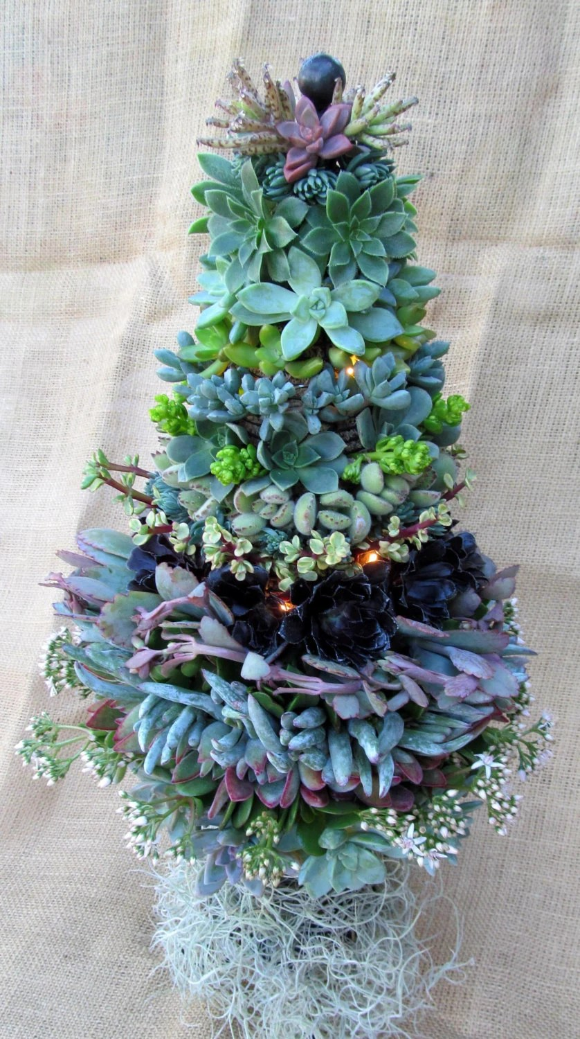 Succulent Christmas Tree 12 Inch By Succulentsolutions On Etsy