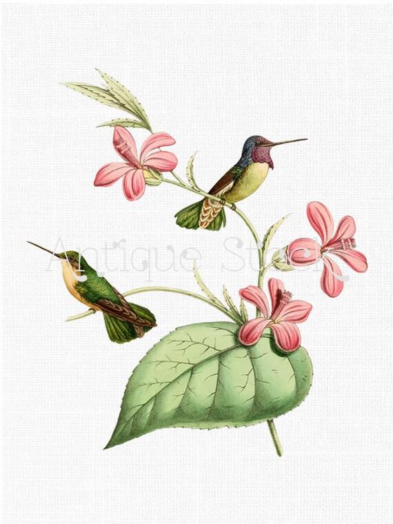 birds clip art costa's hummingbird