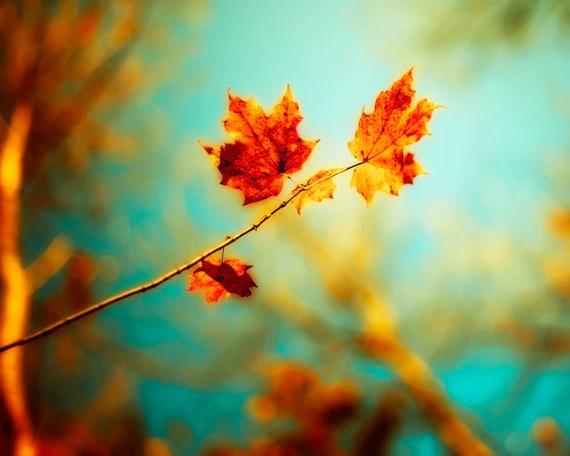 Autumn Photography Burnt Orange Leaves Fall Decor Autumn Wall