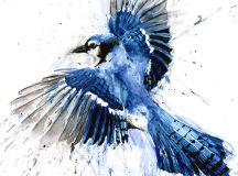 Geai bleu peinture aquarelle Geai bleu Geai bleu art art