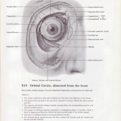 Eye Anatomy Vintage Diagram 1969 Ford Ignition Switch Wiring Medical Page Human Orbital Cavity Eyeball
