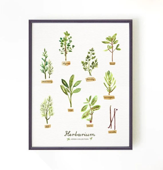 Botanical chart, Kitchen poster, Herb poster, Herb drawing illustration, HERBARIUM Green kitchen decor, Apartment decor, Buy 2 Get 1 Free