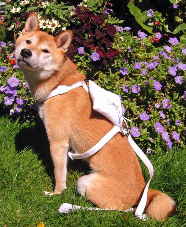Wedding Harness for Dog Ring Bearer Dog Harness Ring
