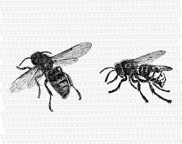 Printable Bees Illustration Digital Graphic High Quality