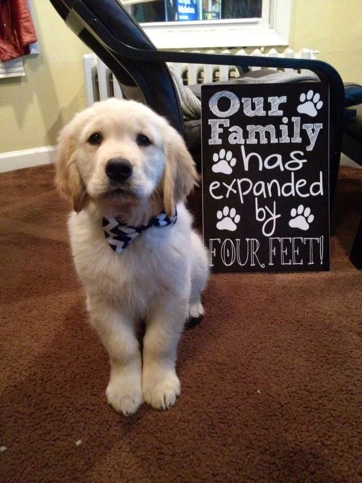 New Puppy Announcement Our Family Has By Customchalkposters