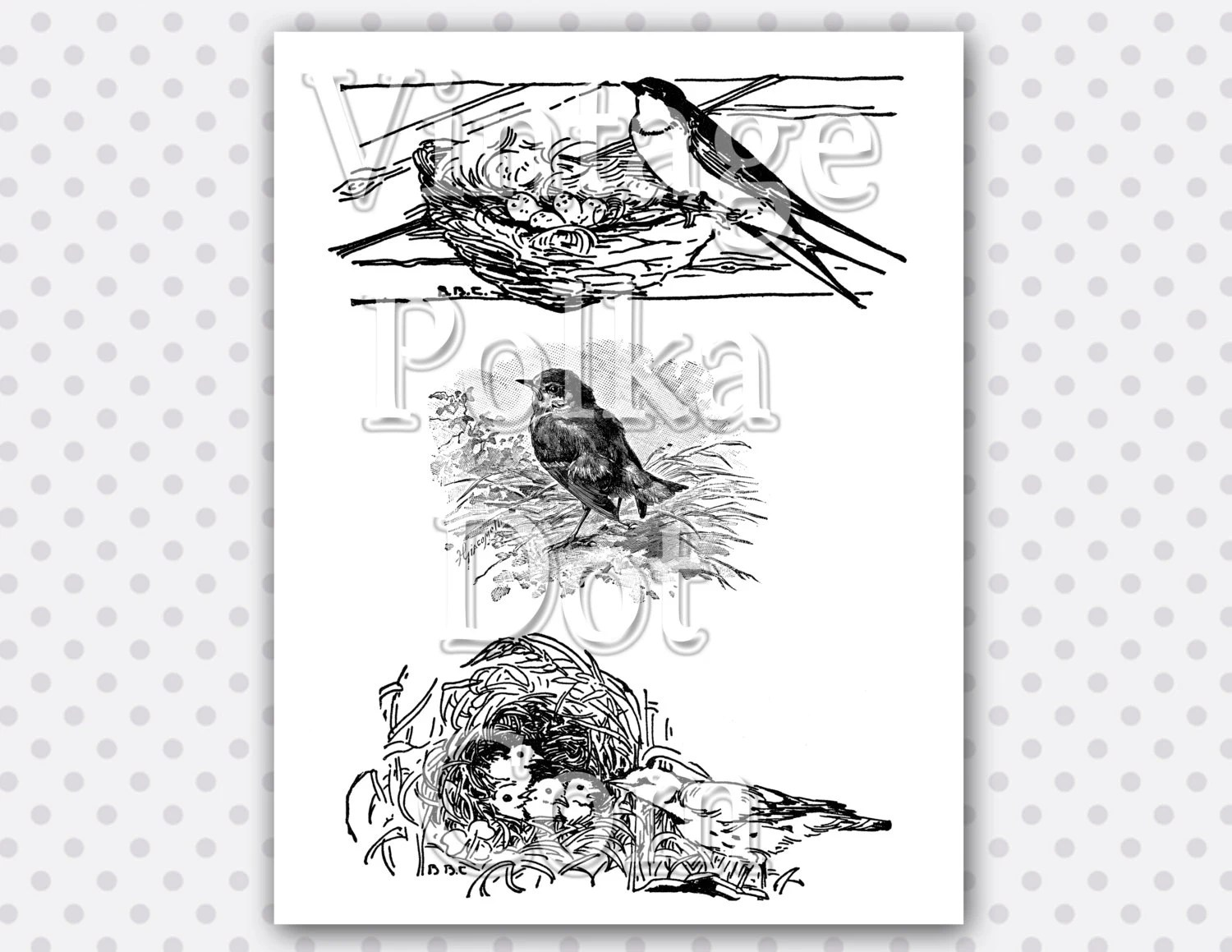 Clip Art Vintage Bird Nest Baby Birds Graphic Clipart