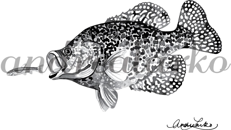 Black Crappie Art Print 8.5x11