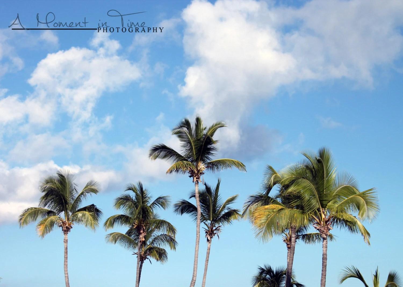 Palm Tree Decor Beach Wall Art Beach Photography Beach
