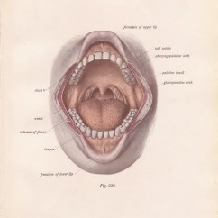 Health Tongue Diagram Chevy Express Wiring Antique Medical Page Human Wide Open Mouth 1911