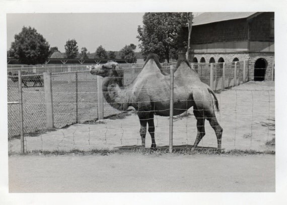 Vintage Snapshot Photo * Uh-Oh! Guess What Day it is?