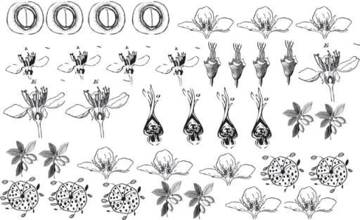Floral Decals for Enamel Ceramics or Glass