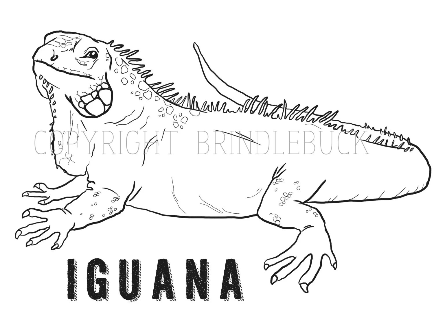 Items similar to Iguana Coloring Page download, reptile